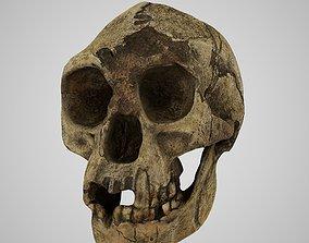 Homo Floresiensis skull 3D print model