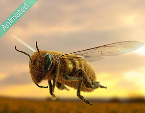 Animated bee 3D model