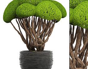 Bonsai tree park 3D