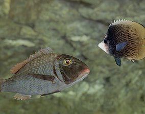 3D Two fish Orange finned emperor and Dark butterfly fish