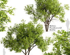 Set of Robinia Pseudoacacia or Black Locust Trees - 2 3D