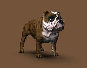 English Bulldog High-Poly 3D print model