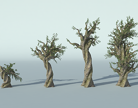 pinus longaeva tree 3D
