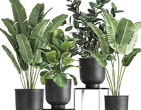 3D Houseplants in a pot for the interior 845