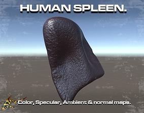 3D asset Human Spleen