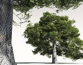 3D EVERYPlant English Oak 06 -- 10 Models