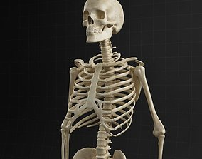Anatomy skeleton 01 3D