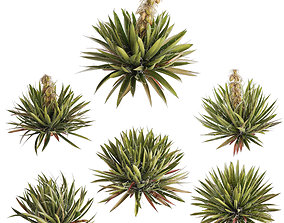 Yucca plants exterior set 3D