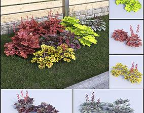3D model coral bells heuchera set