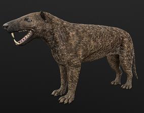 Hyaenodon horridus 3D asset