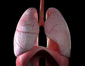 lungs 3D model