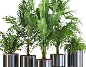 3D Plants collection 543