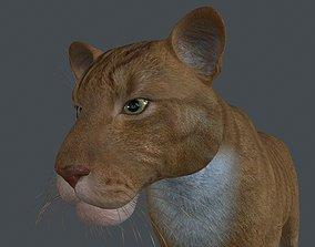 3D model LION-008