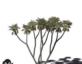 3D model XfrogPlants African Doum Palm