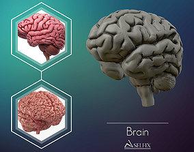 intellect human Brain 3D model Ready to 3D print