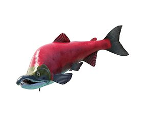 Oncorhynchus Nerka - The Red Sockeye Salmon Static 3D