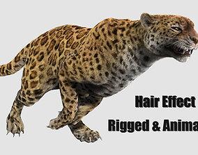 3D asset leopard panther puma jaguar