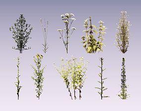 Wild flower set lowpoly 3D asset