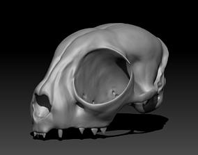 CAT skull for 3D printing