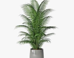 3D Palm 06
