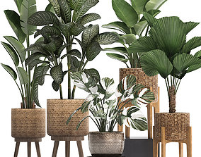 3D Collection of decorative plants in pots for home 454