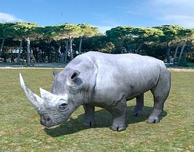 3D model animated African Rhino