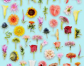 25 Flower Collection 3D asset