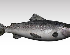 3D model rigged Salmon Fish