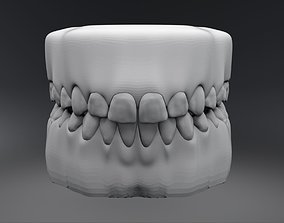 Permanent Teeth with Jaw 3D printable model tooth