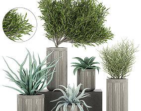 3D model Decorative plants in a concrete flowerpots 802