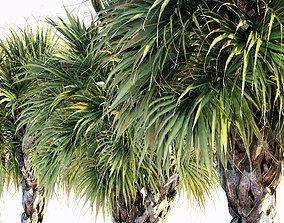 3D model Palmetto Palm tree