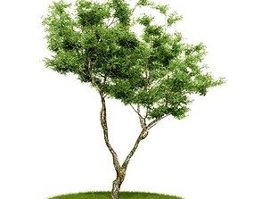 3D model Green Bonzai Tree