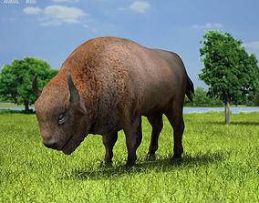 European Bison Bison Bonasus 3D asset