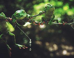 Frog 3d model VR / AR ready wildlife