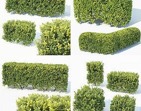 3D model Buxus Sempervirens 4 hedges collection landscape