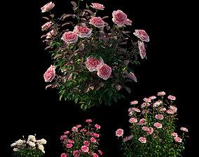 3D model Rose plant set 21