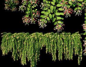 3D Combretum indicum - Quisqualis indica 1 - 5 Model