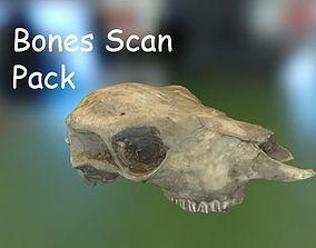 3D model PBR Bones Scan Set 2