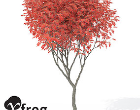 XfrogPlants Staghorn Sumac 3D model