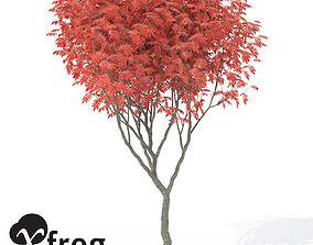 XfrogPlants Staghorn Sumac 3D model