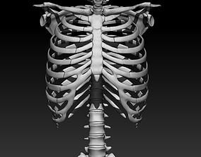Skeleton - Ribcage 3D model