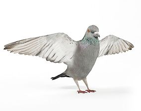 White Bird 3D model