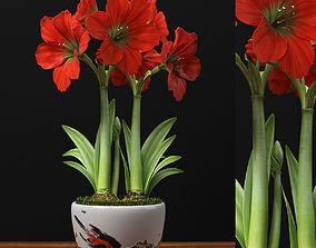 RED AMARYLLIS plant 3D