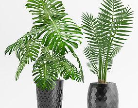 3D Plants 45