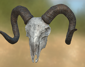 3D model animel Goat Skull