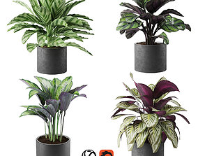 calathea Collection flowerpot 3D model