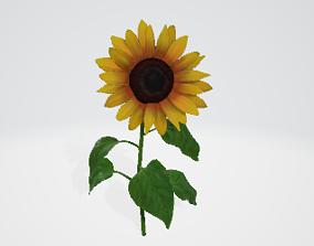 summer sunflower 3D