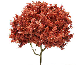 3D Red Oak Quercus rubra L 5m
