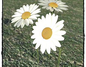 DAISY 3D Flower Model rigged