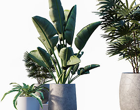plants Plant set 01 3D